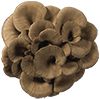 Maitake